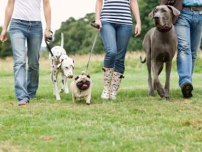 Hunde venner søges