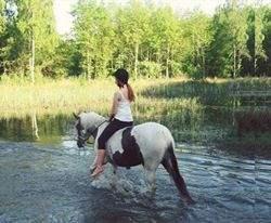Søger en hest til at ride på.