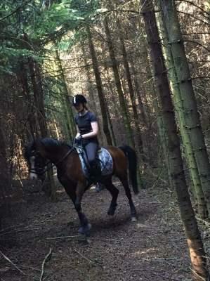 Part på hest søges