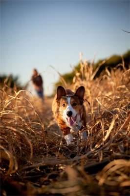 Har du brug for en hundepasser.?